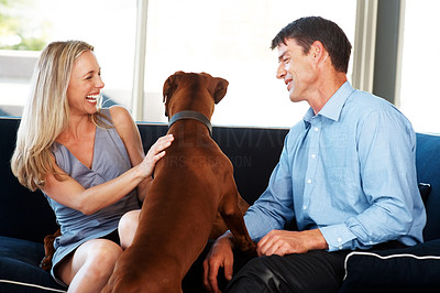 Buy stock photo Portrait of a cute young couple having fun with their pet dog at home - Indoor. Rhodesian ridgeback