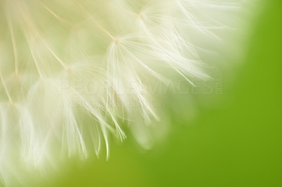 The delicate beauty of nature