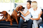 Cute young couple caressing their dog at home