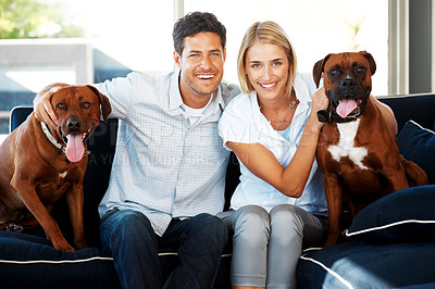 Buy stock photo Portrait of a happy young couple sitting on sofa with their dogs (Rhodesian ridgeback and Boxer) at home