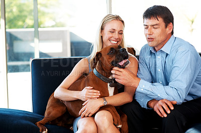 Buy stock photo Portrait of a beautiful young couple sitting together on couch and playing with their pet dog at home. Boxer