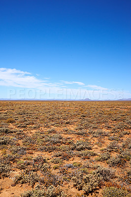Buy stock photo Dry highland savanna in february - South Africa