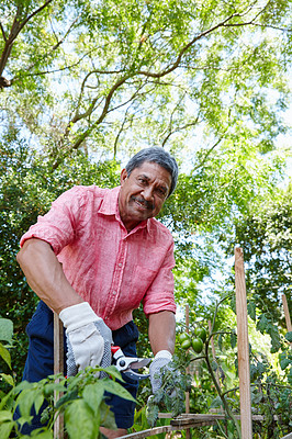 Buy stock photo Shot of a happy senior man gardening in his backyard