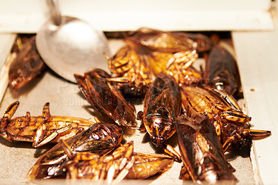 Buy stock photo Closeup of fried cockroaches at a market in Thailand