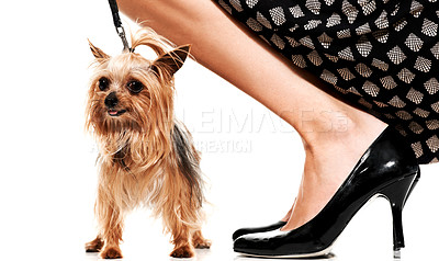 Buy stock photo Portrait of a yorkshire terrier and its owner bending next to it - Isolated
