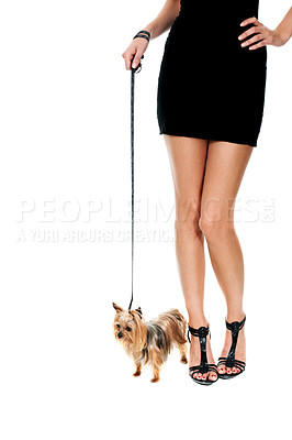 Buy stock photo Cropped image of a sexy woman in heels walking her yorkshire terrier