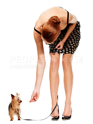 Buy stock photo A young woman bending over to give her little dog a treat