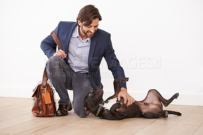 Buy stock photo A handsome businessman playing with his dog