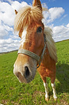 A photo of a beautiful  brown horse on a green field