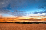 Sunset in the countryside in late summer - lots of copyspace