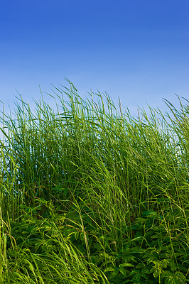 Buy stock photo Green grass and blue sky