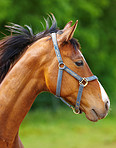 A beautiful horse in the countryside
