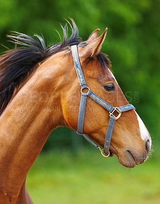Buy stock photo A beautiful horse in the countryside