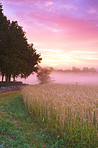 Misty daybreak over the farm