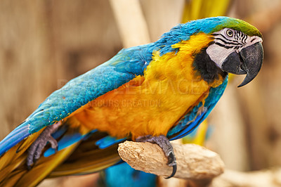 Buy stock photo Shot of a parrot sitting on a branch