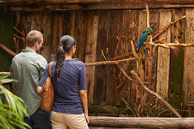 Buy stock photo A young couple looking at birds in a zoo