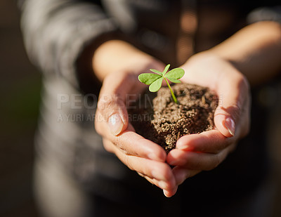 Buy stock photo Shot of an unidentifiable young woman holding a seedling in a pile of soil