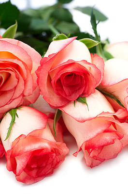 Buy stock photo Bunch of delicate pink roses isolated on white