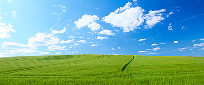 Landscape photo - green field, clouds, and blue sky