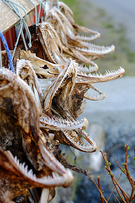 A photo Air dried fish in Norway