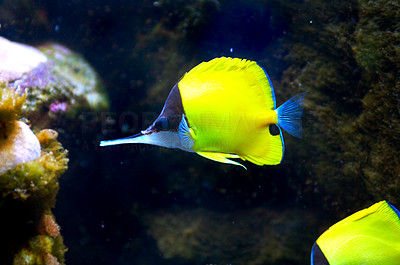 Buy stock photo Shot of a fish in an aquarium
