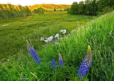 Buy stock photo The countryside in springtime - lots of copy space