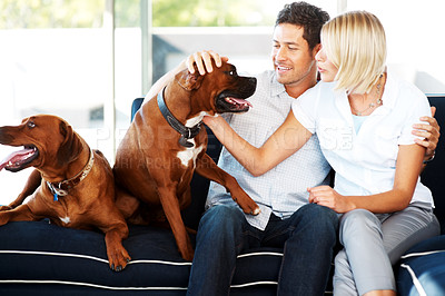 Buy stock photo Portrait of a cute young couple caressing their dog while sitting on couch at home
