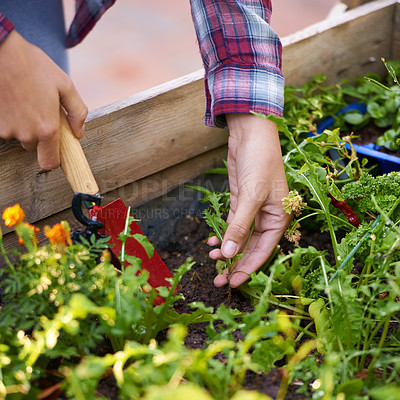 Buy stock photo Cropped shot of a woman planting a seedling in a boxed garden