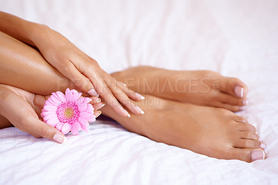 Buy stock photo Closeup shot of a woman holding a pink flower