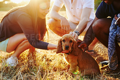 Buy stock photo Shot of a group of friends playing with an adorable dog