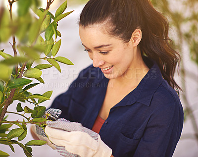 Buy stock photo Shot of a young woman trimming a tree in her garden
