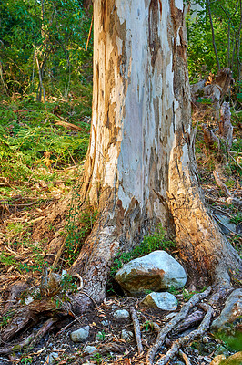 Buy stock photo Hardwood forest uncultivated