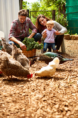 Buy stock photo Shot of a couple with their baby girl watching chickens in their organic garden