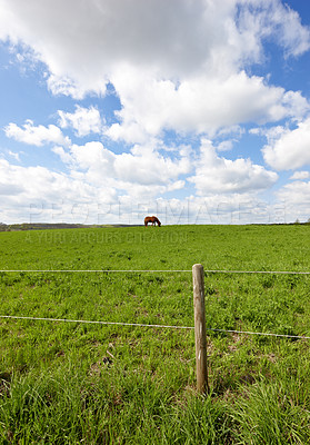 Buy stock photo A photo of a beautiful  brown horse on a green field