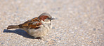 A telephoto of a small sparrow in early sunset (Central Park, Manhattan)
