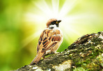 A telephoto of a sparrow in sunlight