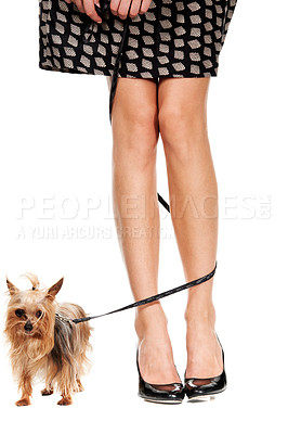 Buy stock photo Cropped view of a woman's legs with her dog's leash wrapped around them
