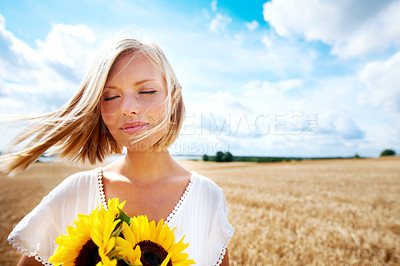 Buy stock photo Happy young woman standing in a wheat field and holding some sunflowers