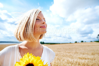 Buy stock photo Smiling young woman standing in a wheat field and holding some sunflowers