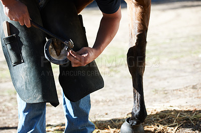 Buy stock photo A farrier attaching a horseshoe to the bottom of a horse's hoof