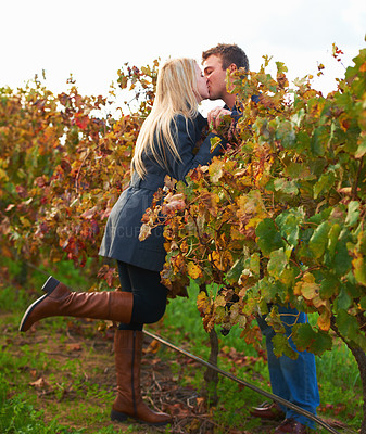 Buy stock photo A young couple kissing on the vineyards