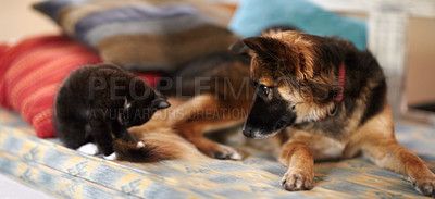 Buy stock photo An adorable picture of a kitten and young dog lying on a bed