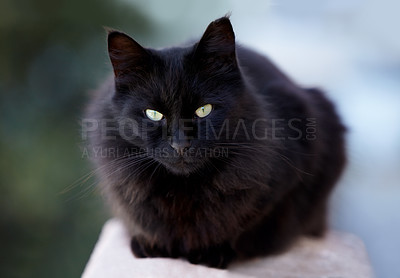 Buy stock photo A black cat looking at you