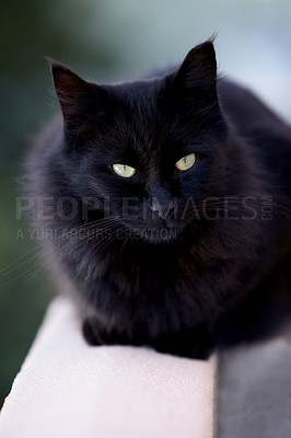 Buy stock photo Cropped view of a black cat looking away