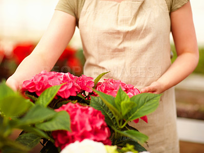 Buy stock photo Mid section image of young female florist working while at a greenhouse