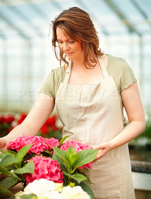 Buy stock photo Happy young female florist working while at a greenhouse