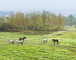A photo of horses in natural setting