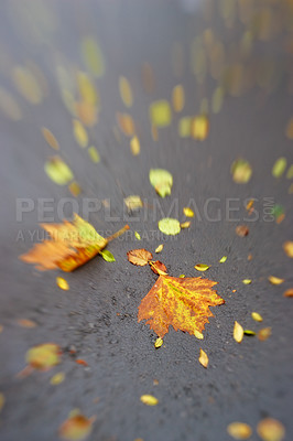 Buy stock photo A photo of nature in autumn colors
