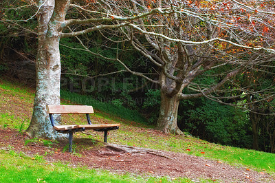 Buy stock photo A photo of beautiful autumn colors