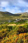 Hillsides of the Western Cape